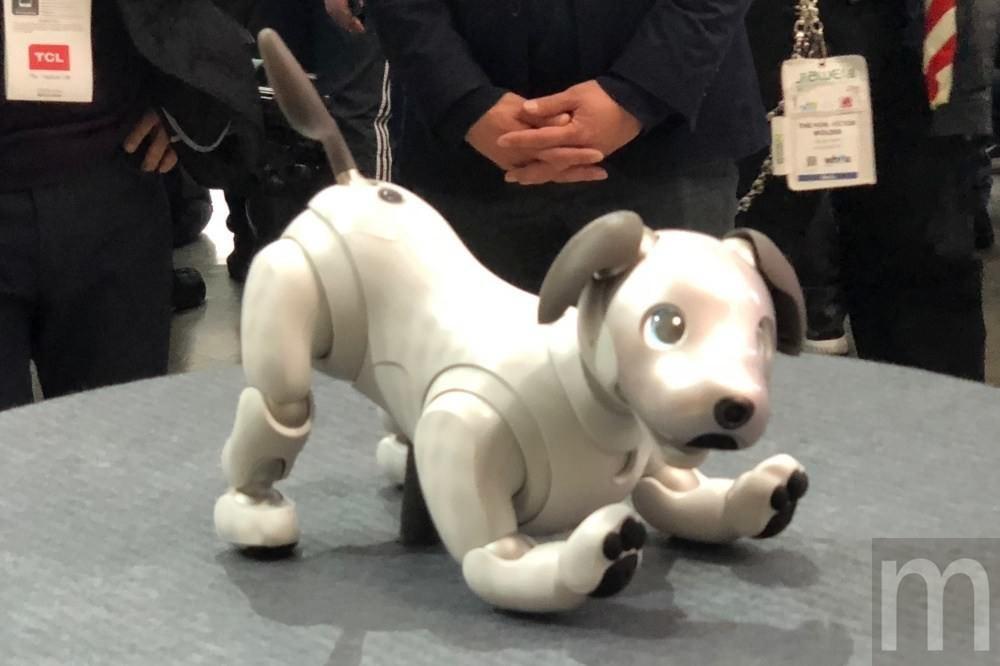 是Sony:機器狗aibo短短3個月內已經累積1.1萬台銷售數量這篇文章的首圖