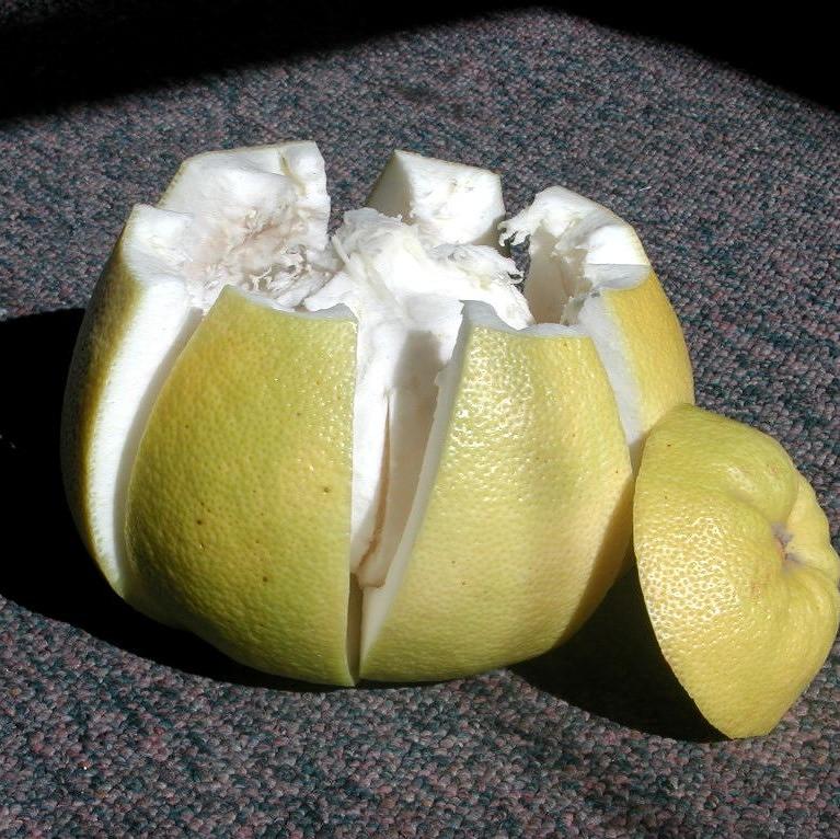 是驅蚊、清潔、製糖... 剩下的柚皮有5大功用這篇文章的首圖
