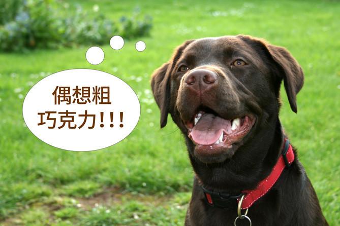 是巧克力vs狗狗(上):狗狗為何會巧克力中毒?這篇文章的首圖