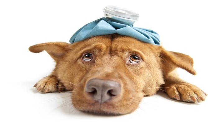 是巧克力vs狗狗(下):狗狗巧克力中毒急救(催吐篇)這篇文章的首圖