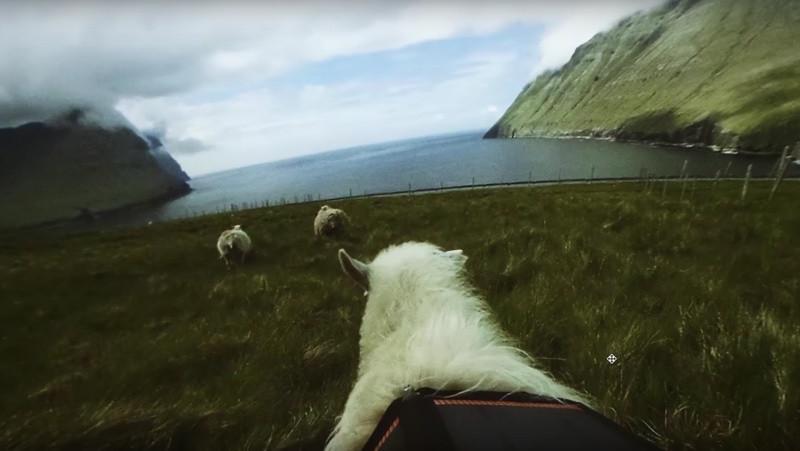 是Google街景服務進駐法羅群島 將由羊群協助拍攝這篇文章的首圖