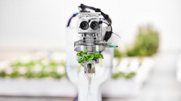 是AI技術延伸 : 機器人農夫這篇文章的首圖
