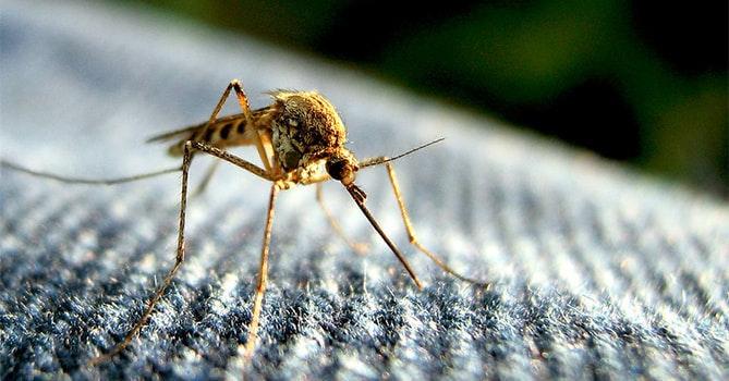 照片中包含了蚊子在家裡、蚊子、昆蟲、滅蚊、驅蟲劑