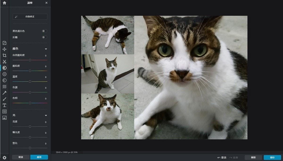 照片中提到了白劲修正、黑色與白色、反轉,包含了動物群、晶須、愛琴海貓、小貓、家養短毛貓