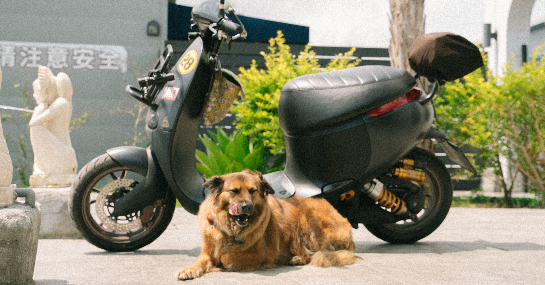 照片中提到了青注意安全,包含了狗、摩托車、狗、摩托車、狗品種