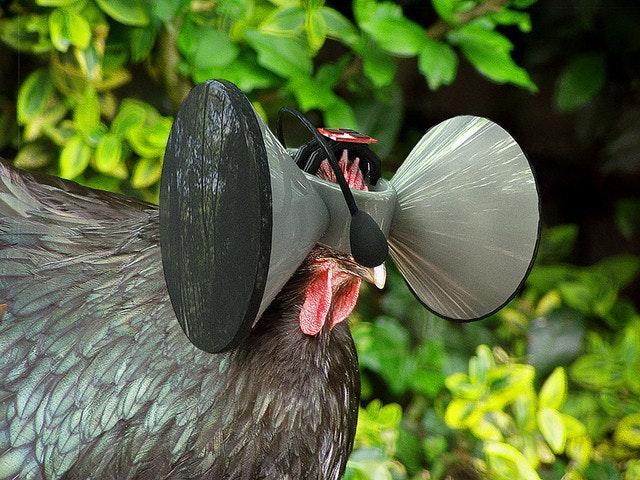 是雞也有第二人生?Second Livestock 概念想喚醒大家的同理心這篇文章的首圖