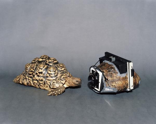 讓人驚異的相機:利用龜殼、書本等等與眾不同材料所改作的相機機身