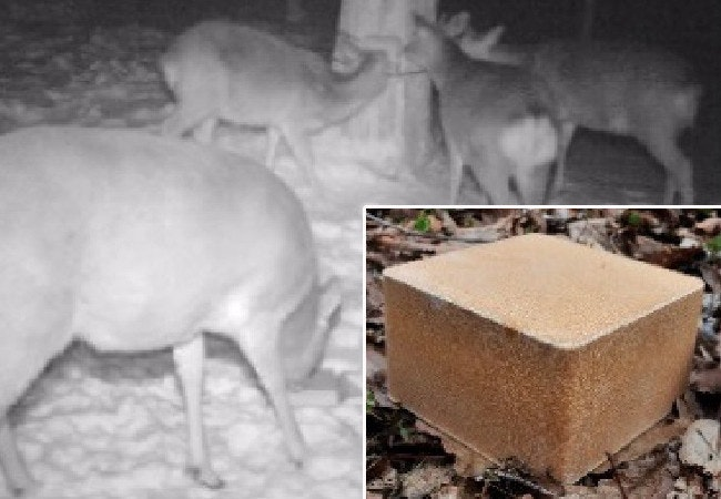 是鹿為什麼老是跑道鐵軌上?日本人如何解決這個問題這篇文章的首圖