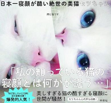 是日本美麗小白貓超反差萌,睡相崩壞崩到出書這篇文章的首圖