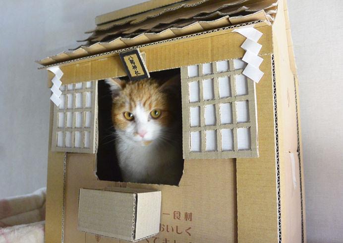 是把家中貓咪當神明拜,自製神社貓屋這篇文章的首圖