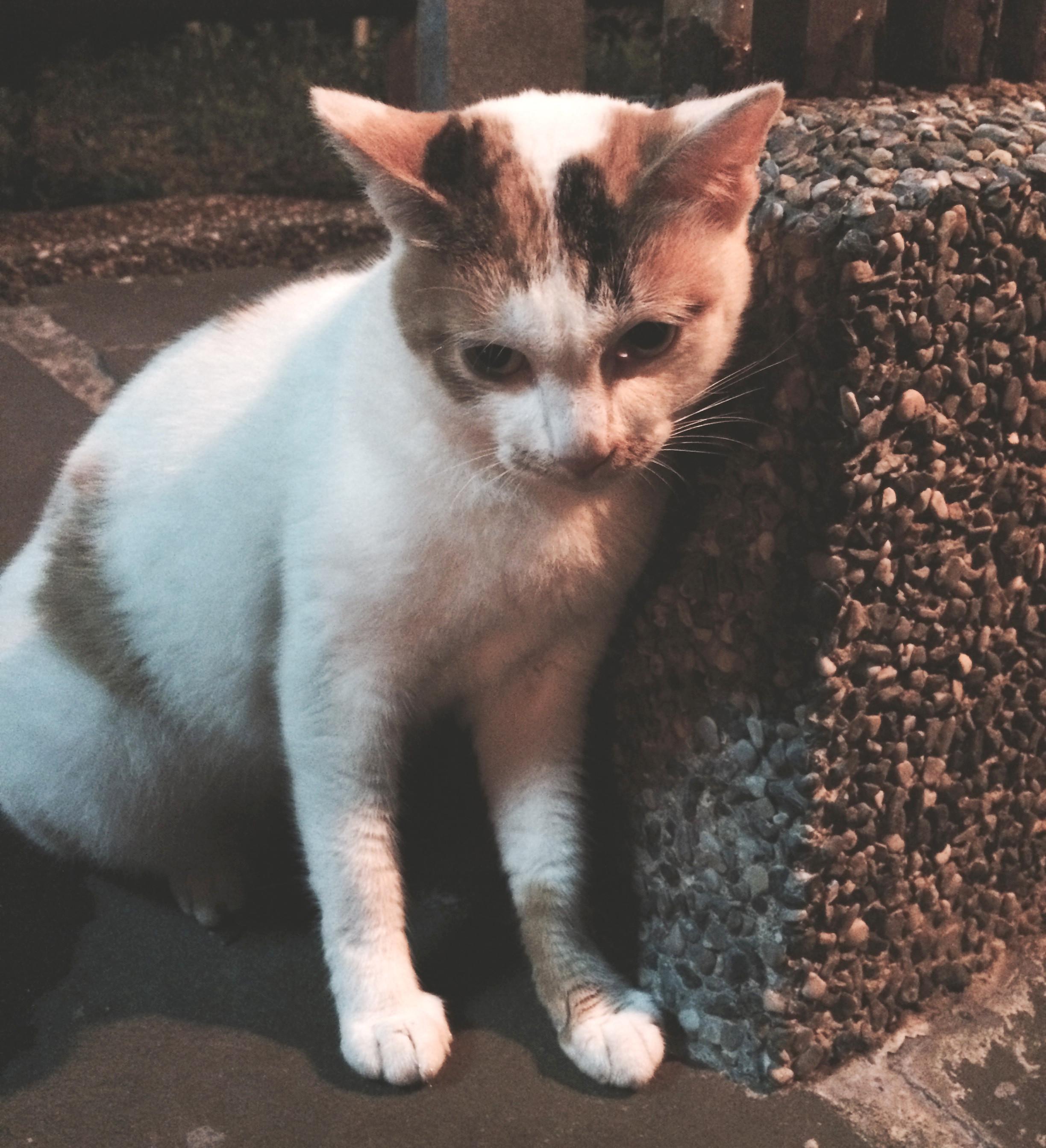 """是繼貓肉球味護手霜之後,日本又推出了 """"貓頭皮味香水""""這篇文章的首圖"""