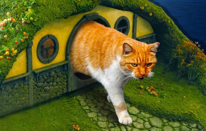 是魔戒超級粉絲養的貓,就住在哈比屯裡這篇文章的首圖