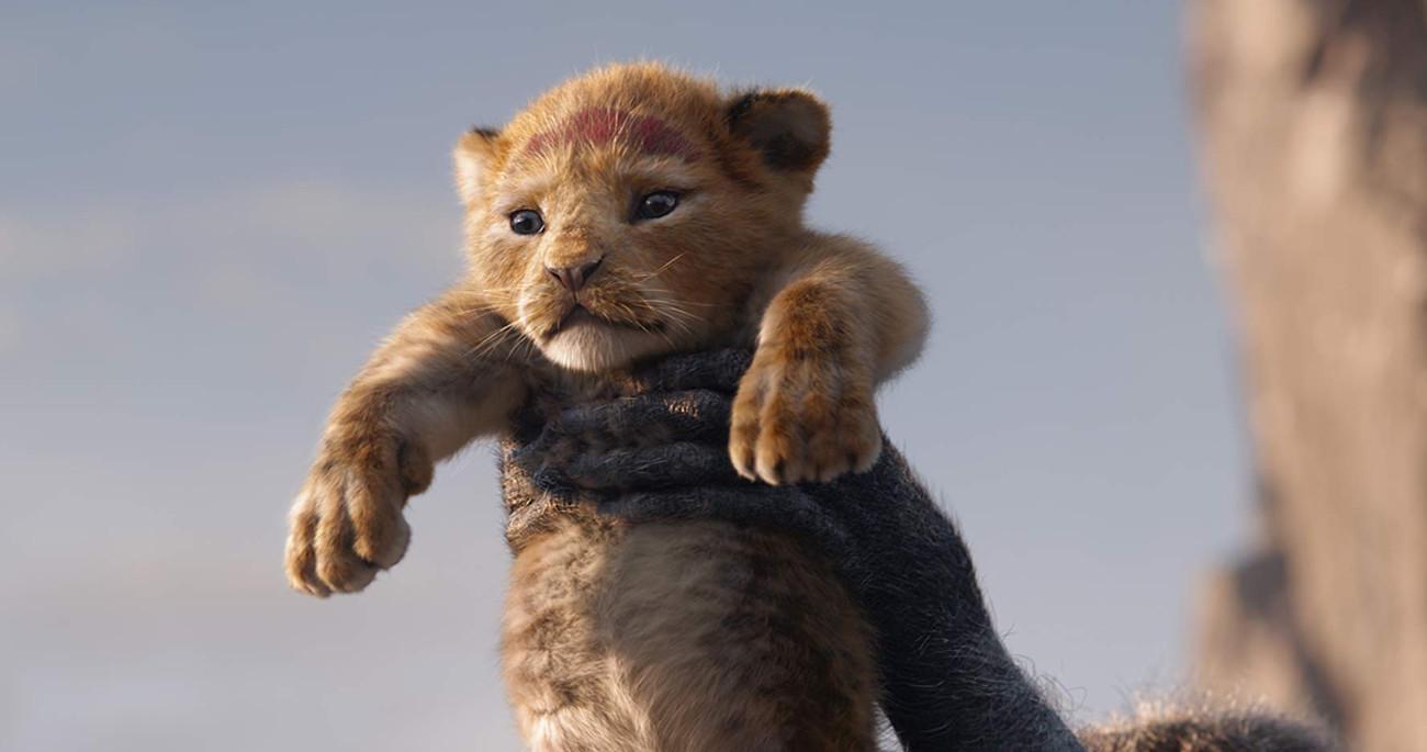 Simba, Nala, Film, Live action, Movie: The Lion King, Lion King Movie, Animation, , Trailer, Walt Disney Pictures, lion king 2019, Mammal, Vertebrate, Terrestrial animal, Felidae, Wildlife, Lion, Whiskers, Carnivore, Big cats, Snout