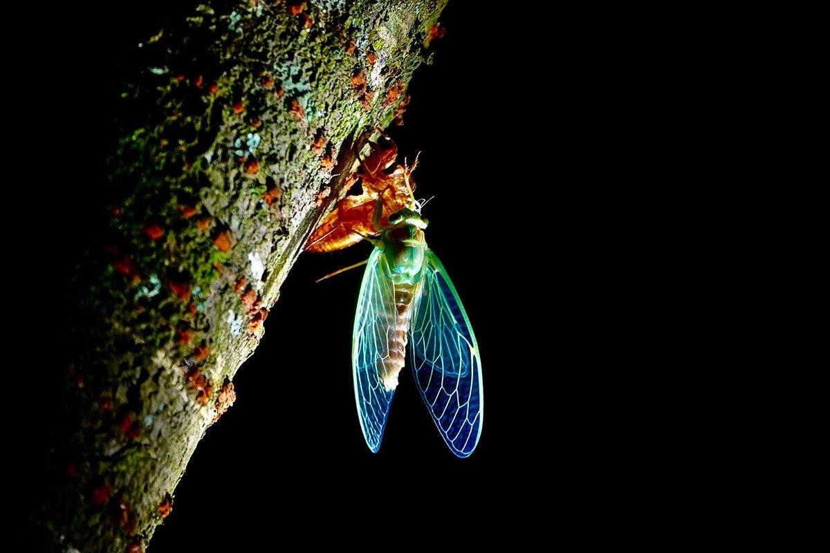 照片中包含了微距攝影、南大昆蟲博物館、昆蟲、攝影、照片