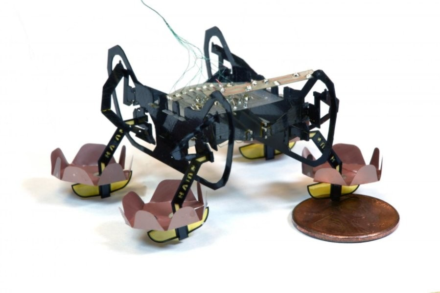 Cockroach, Robot, Robotics, Microbotics, Harvard University, Underwater robots, Insect, Robot Magazine, Technology, Boston Dynamics, rolls royce cockroach robot, technology, shoe
