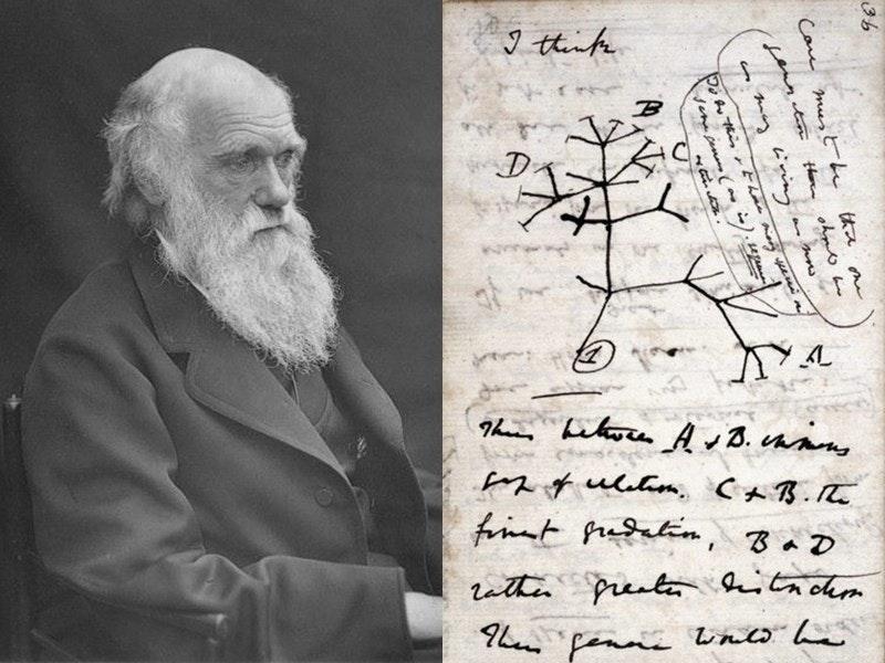 照片中提到了I thinke、B、finnt fredatin, BaD,包含了查爾斯·達爾文、物種起源、演化、達爾文紀念日、達爾文主義