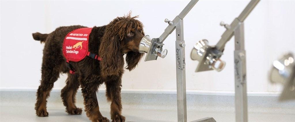 照片中提到了ETIO O、Dendon Dogs,跟烤肉串Turki Baba Rafi有關,包含了倫敦衛生與熱帶醫學學校的狗、倫敦衛生與熱帶醫學院、狗、醫學、熱帶醫學