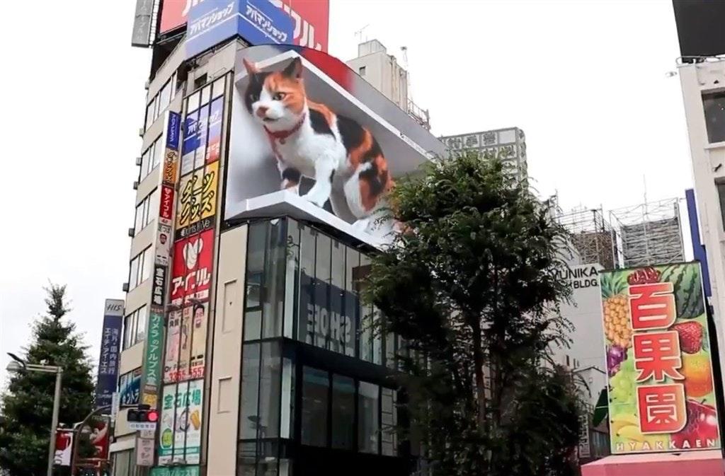 照片中提到了關D果周、、國內、H A-HN,跟於爾克有關,包含了貓、貓、新宿區、印花布貓、喵