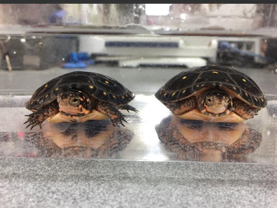 是無意間的驚人發現!?印度人和烏龜的關係是…?這篇文章的首圖