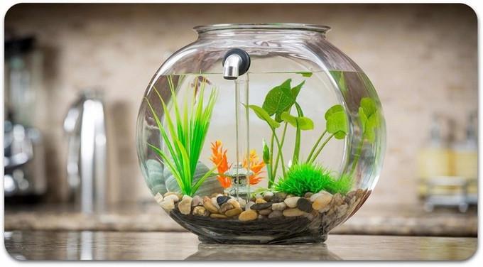 是運用重力流原理可自動清潔的魚缸這篇文章的首圖