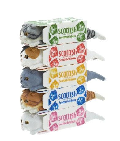 是面紙盒中的蘇格蘭折耳貓扭蛋這篇文章的首圖