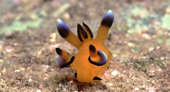 是皮卡丘4ni…(丟球)-太平洋多角海蛞蝓這篇文章的首圖