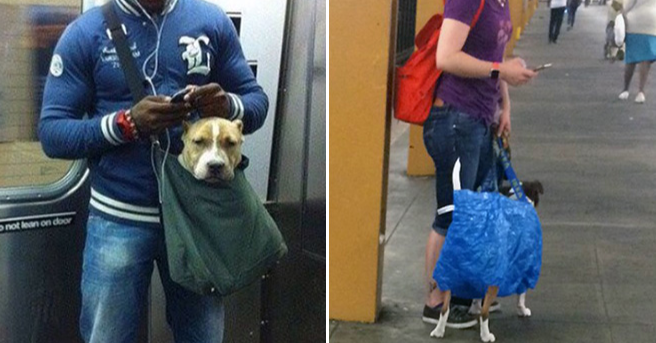 New York City Subway, , Rottweiler, Puppy, Beagle, Bag, Pet, Subway Restaurants, , Subway, dogs in bags on subway, Dog, Canidae, Dog breed, Companion dog, Street dog, Carnivore, Snout, Jeans, Pit bull