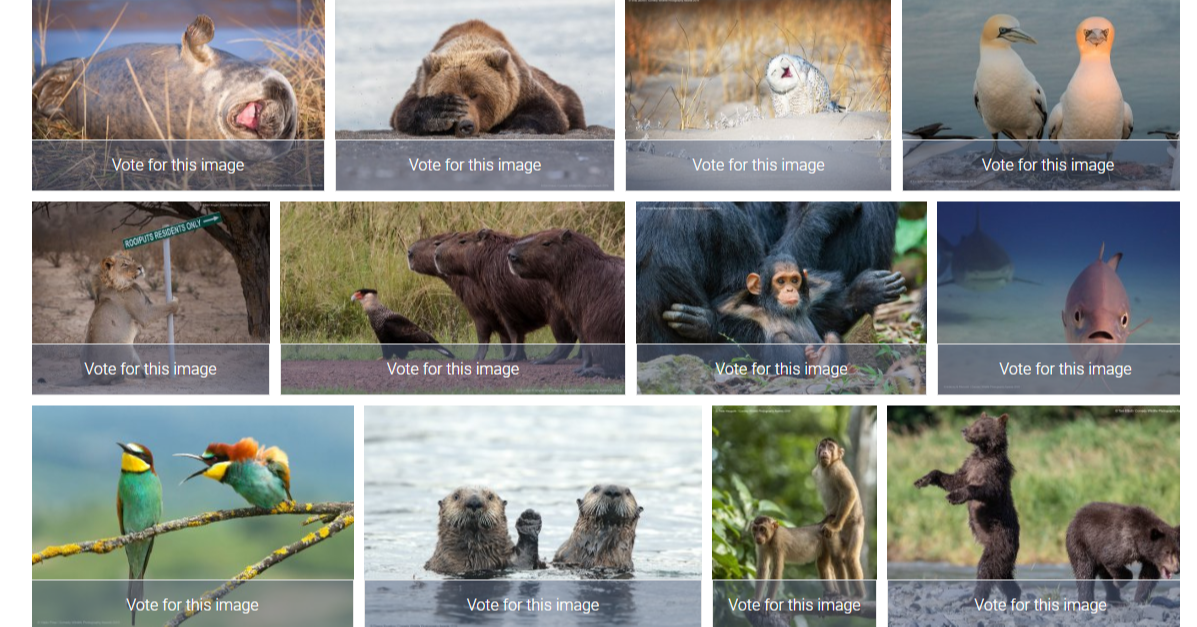 Ecosystem, Fauna, Photo caption, Mammal, Snout, wildlife, Wildlife, Adaptation, Organism, Canidae, Bird, Hunting dog, Ancient dog breeds, Collage, Dog breed, Screenshot