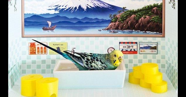 照片中提到了Kotori-yu,包含了壁、費利斯西莫、設計、日本文化、產品