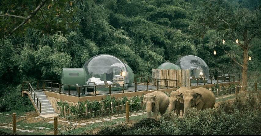 照片中包含了叢林泡泡安納塔拉、安納塔拉金三角大象營地度假村、金三角、馬爾代夫基哈瓦安納塔拉別墅、採取