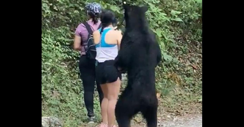 照片中包含了熊、熊、美國黑熊、瘋狂大早晨秀、病毒視頻