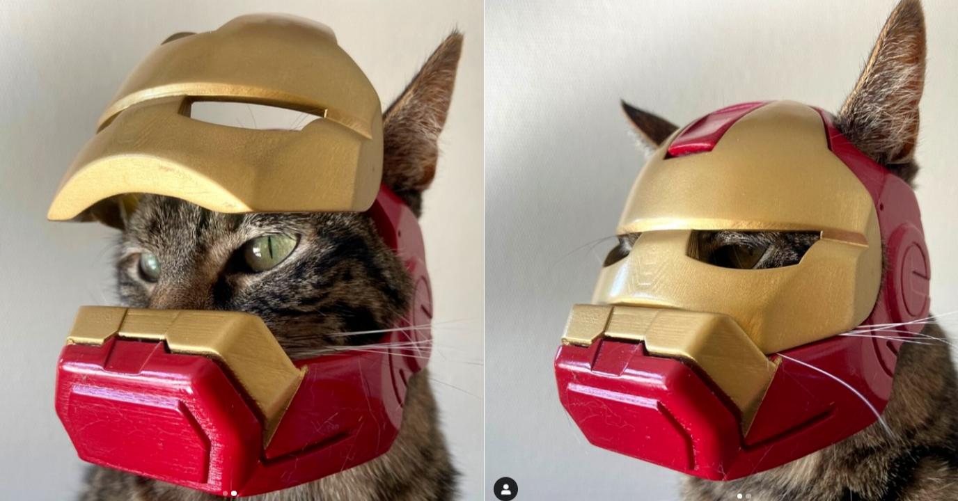 照片中包含了面具、貓、鼻子、面具