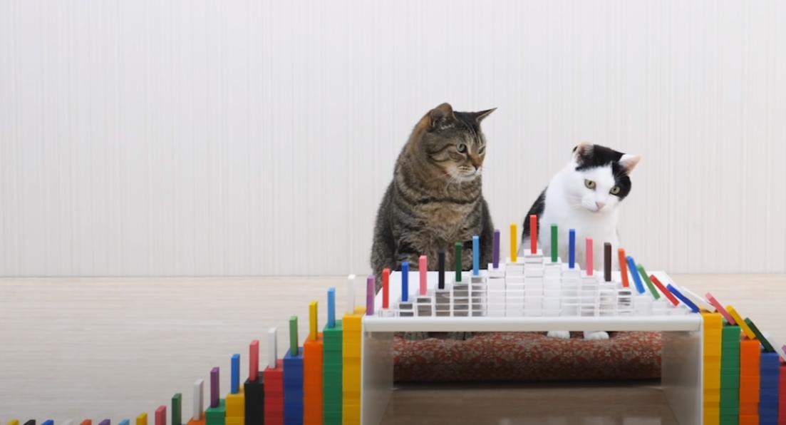 照片中包含了骨牌、骨牌、貓、貓咪導航台、可愛