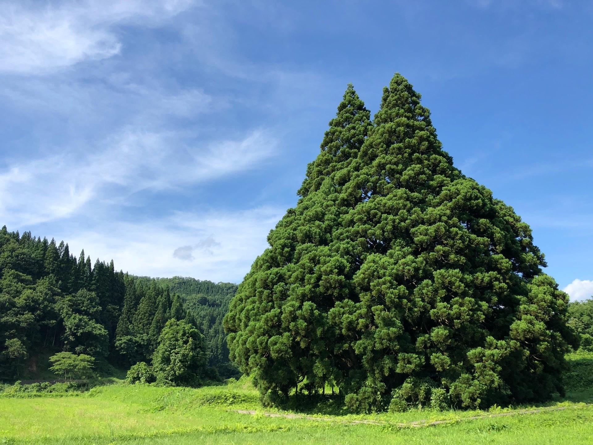 照片中包含了植被、溫帶針葉林、熱帶和亞熱帶針葉林、針葉樹、植被