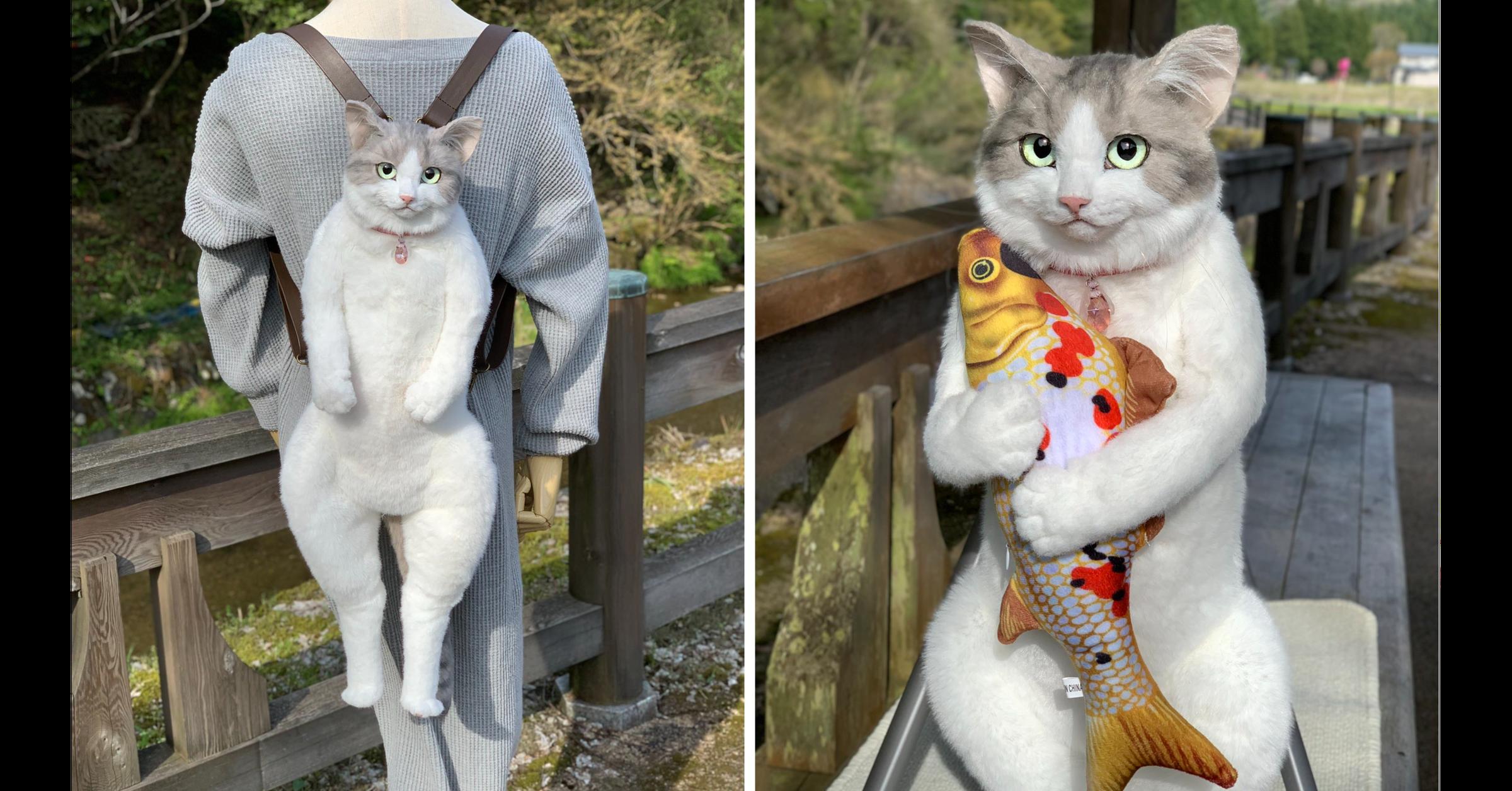 照片中提到了NCHINA,包含了貓、貓、動物群、Fur'M