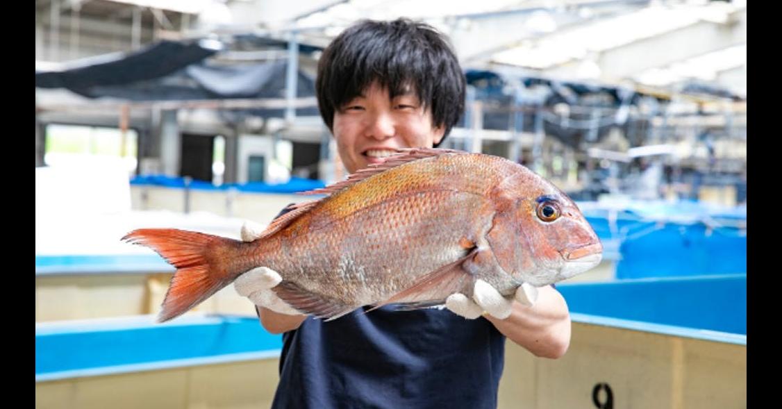 照片中包含了紅鯛魚、魚、魚製品、海鮮、北部紅鯛魚