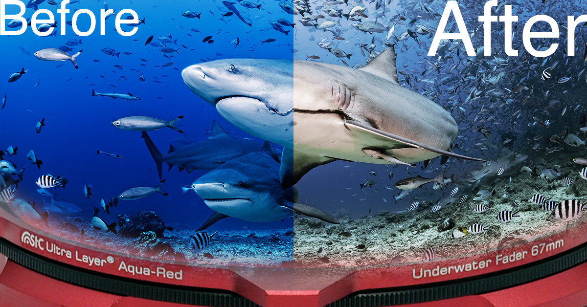 是STC Aqua-Red 潛水濾鏡讓照片不再藍!超神效果讓國際知名水下攝影師都說讚~這篇文章的首圖