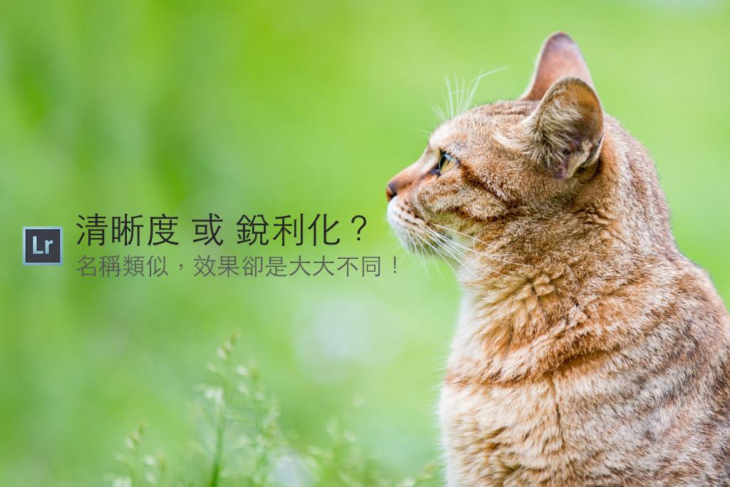 是[攝影小教室] 貓毛看起來根根分明超清晰?到底我該從清晰度調整還是從細節銳利化處理呢?這篇文章的首圖