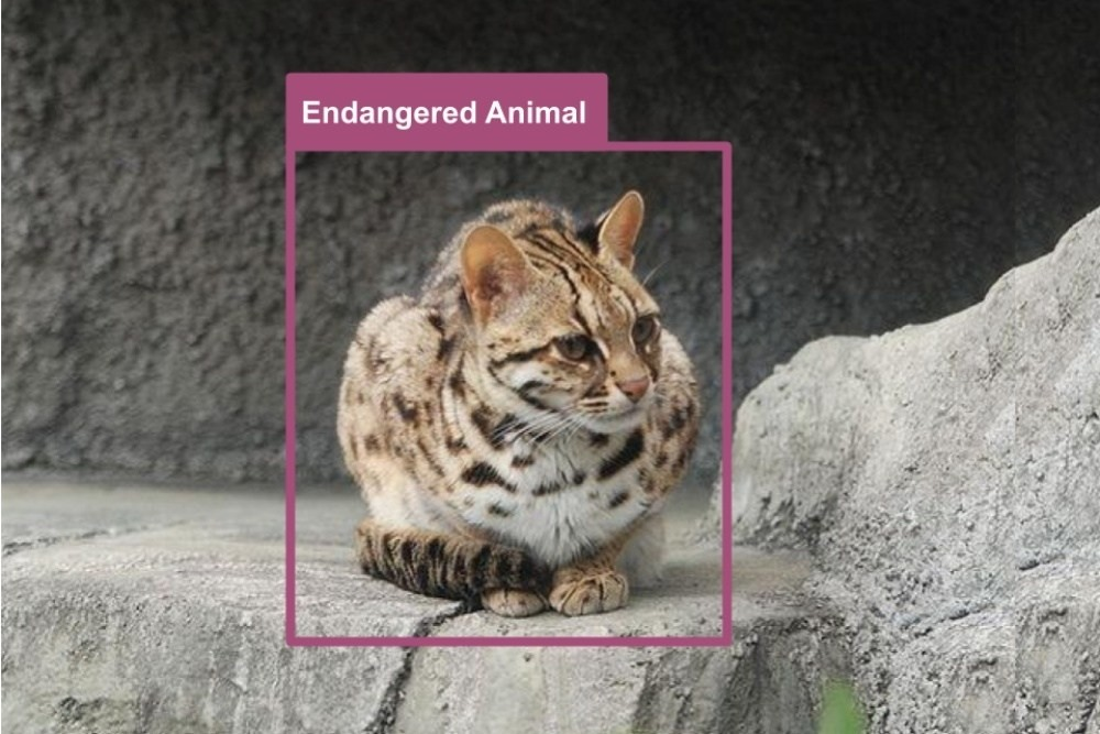 Cat, Wildcat, Leopard cat, Endangered species, Animal, Leopard, Tiger, Andean mountain cat, Big cat, Geoffroy's cat, endangered animals in nagaland, Cat, Mammal, Felidae, Small to medium-sized cats, Whiskers, Snow leopard, Wildlife, Wild cat, Carnivore, Bengal