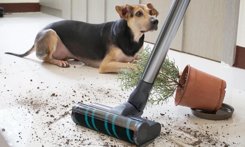 照片中提到了SAMSUNG,包含了鼻子、狗、狗品種、鼻子、流浪狗