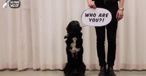 是「汪星人」翻譯機 • 狗狗從此會講人話!這篇文章的首圖