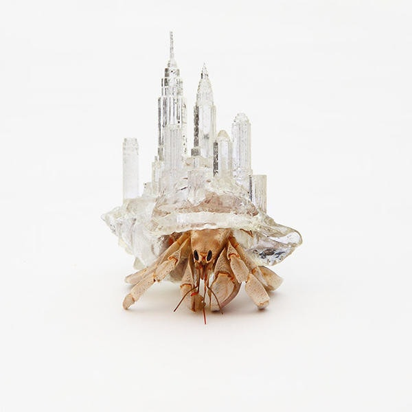 是3D 列印的寄居蟹殼,怎麼突然有點羨慕......這篇文章的首圖