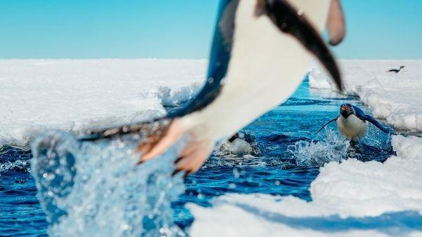 是攝影師被困南極?正是拍攝好機會這篇文章的首圖
