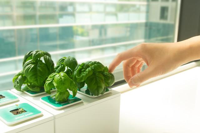 是1分鐘家庭水耕菜園這篇文章的首圖