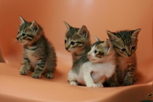 是小貓認養  意者入內這篇文章的首圖