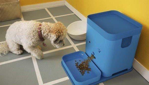 是Pawport 智能寵物餵食器這篇文章的首圖