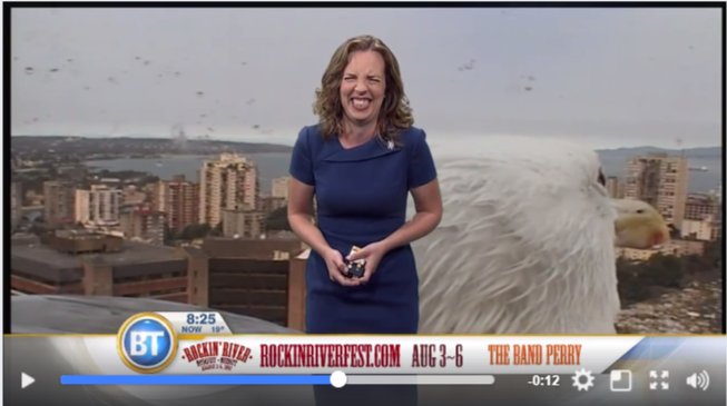 是很「鳥」的新聞播報,進擊的海鷗也來參一腳…這篇文章的首圖