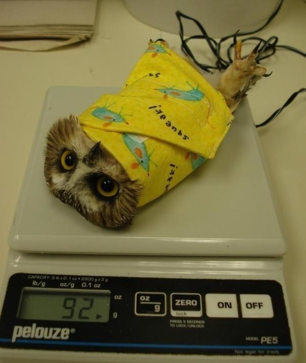 是你知道鳥類體重的測量方式嗎這篇文章的首圖