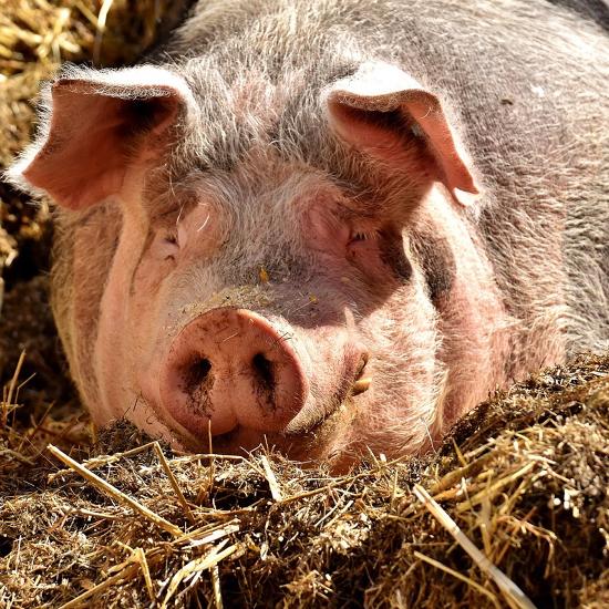 是不只豬肉不能帶入境,其他動植物產品也禁止攜入國內這篇文章的首圖